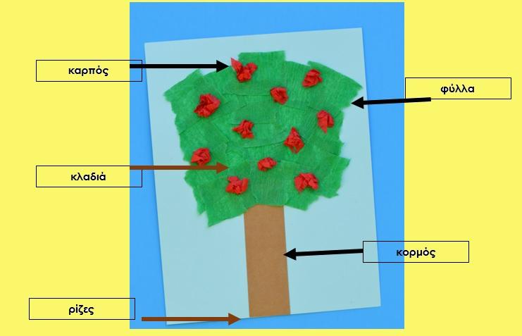 τα μέρη του δέντρου